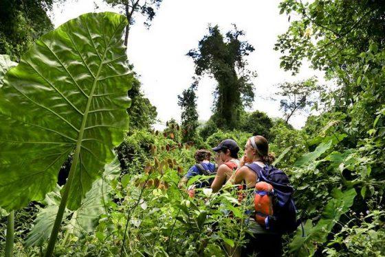 Trek au parc national de Phong Nha Ke Bang