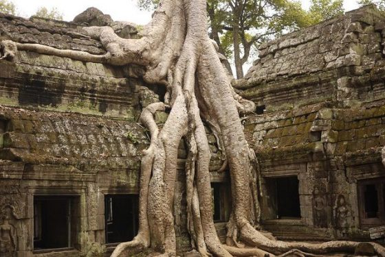 temple Ta Prohm Siem Reap