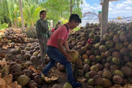 atelier de transformation de la noix de coco