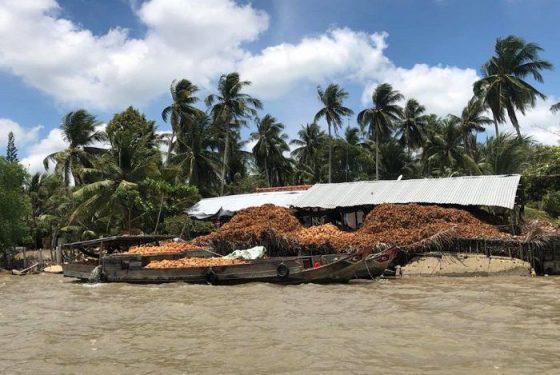 bateau chargé de cocos dans le delta du mekong