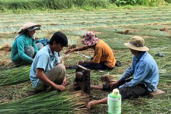 travail dans le champ dans le delta du Mekong